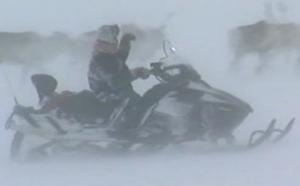 reindeer roundup as filmed by ZDF, Dec 2012