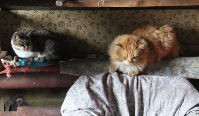 Cats of Barentsburg. Photo: Anna Stammler-Gossmann
