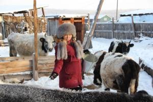 people help animals to develop their herd instinct, here Matrena Baisheva with her herd