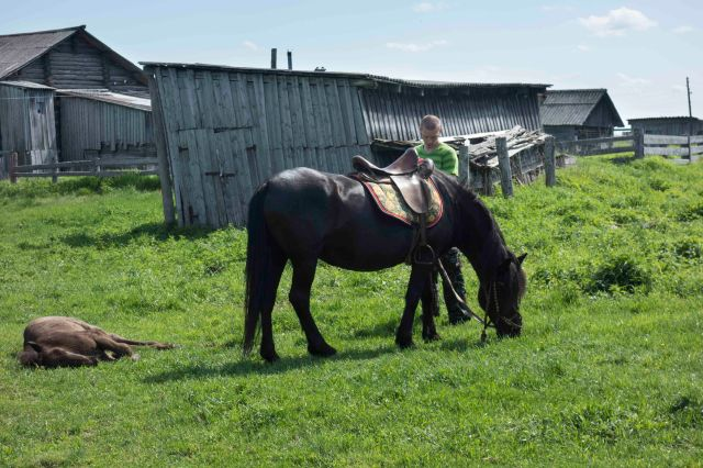 2018-06-22_Conference_Horse_Breeding_Mezen-6